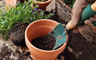Благоприятные дни для пересадки комнатных растений — лунный календарь на 2018 год