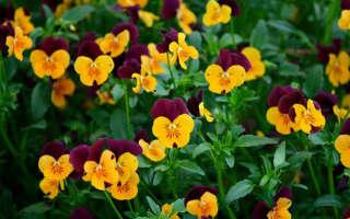 Красивые желтые цветы многолетники для сада: каталог с названиями и фото