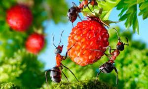 Методы борьбы с муравьями в саду и огороде