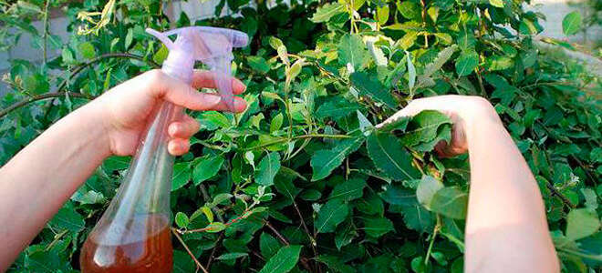 Фитолавин — инструкция по применению для растений