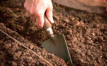 Особенности подзимней посадки овощей и цветов в Подмосковье