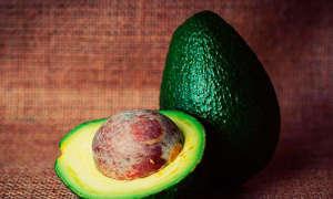 Авокадо в домашних условиях — выращивание и уход