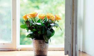 Как посадить и вырастить розу из черенка?