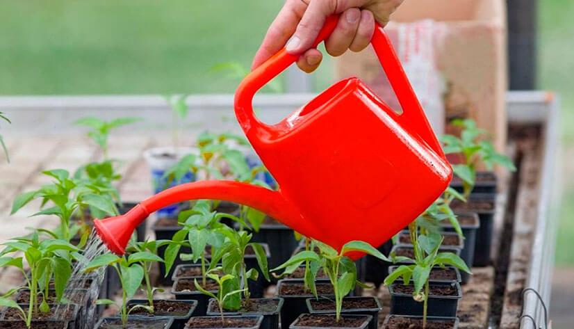 Перекись водорода как удобрение для растений