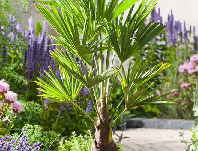 Комнатные пальмы и их виды, которые идеально подходят для выращивания в домашних условиях