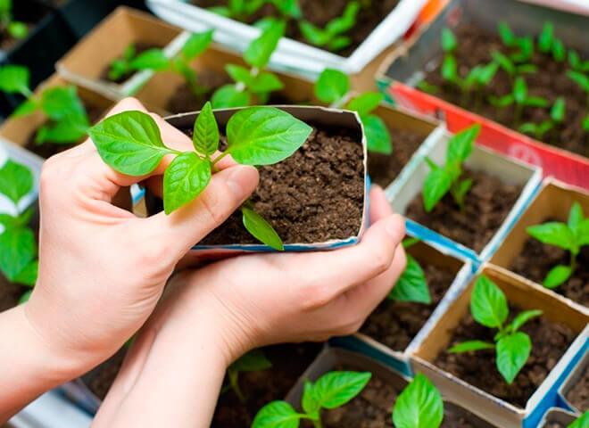 Когда садить растения по лунному календарю?