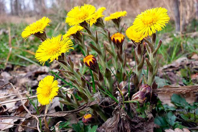 Как выглядит растение, фото