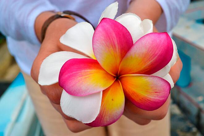 Как выглядят самые красивые цветы планеты?