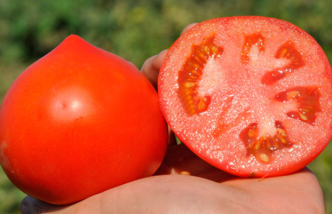 Зачем собирать семена томатов самостоятельно?