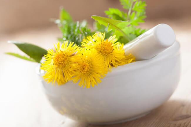 Мать-и-мачеха полезные свойства и противопоказания   фото как выглядит растение