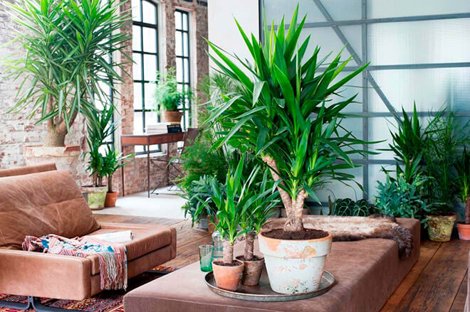 Уличные растения похожие на пальму