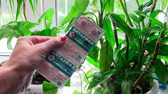 Применение янтарной кислоты для растений виды в таблетках