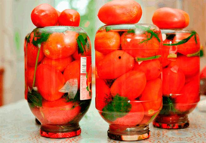 Соление бурых помидоров холодным способом