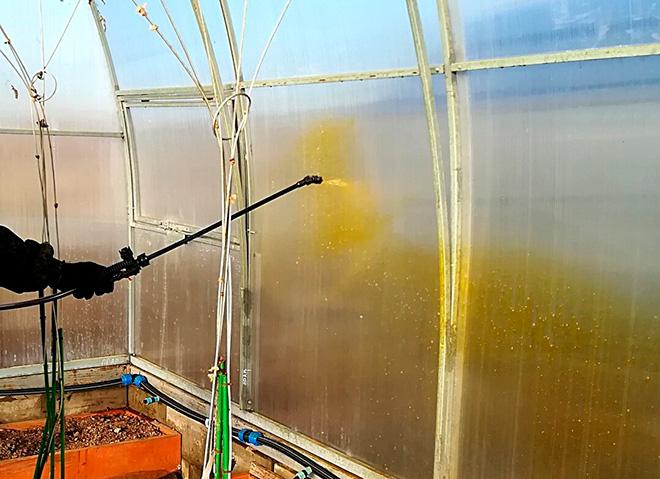 Обработка теплицы медным купоросом весной и осенью: дозировки и видео