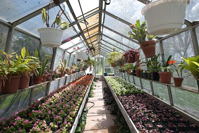 Выращивание цветов в теплице как бизнес: какие цветы выгоднее выращивать